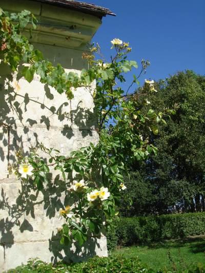 roses400.jpg